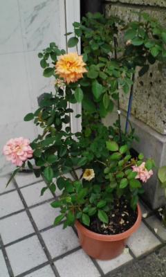 20101015honbu1.jpg