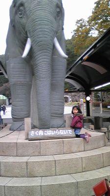 20101120hon1.jpg