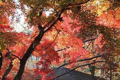 http___sugar-clip.jp_wp-content_uploads_2010_11_IMG_1233.jpg